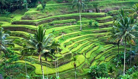 Tempat Wisata Di Bali Yang Wajib Dikunjungi 10 Favorit