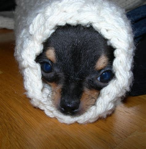 puppy burrito the gallery for gt burrito puppy