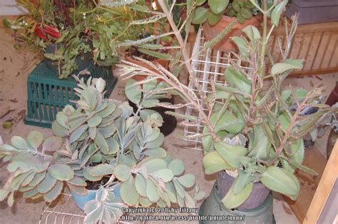 cactus and tender succulents forum how many plants can