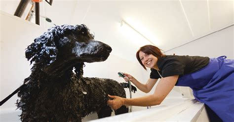 A Call For Model Pets by Duchy College Rosewarne Wants Canine Models