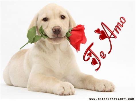 imagenes tiernas de amor con rosas im 225 genes de amor con rosas y corazones im 225 genes de amor