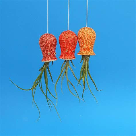 hanging air plant octopus air plant hanging planter the green head