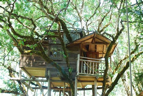 wallmarks tree house hotels oregon s out n about treehouse treesort has the world s