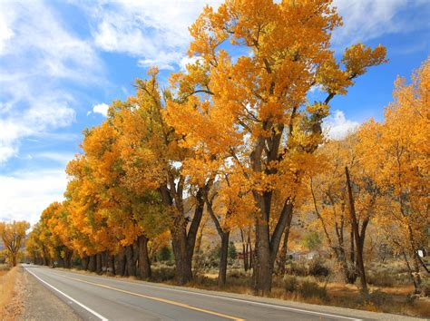 california fall colors california fall color 187 eastern