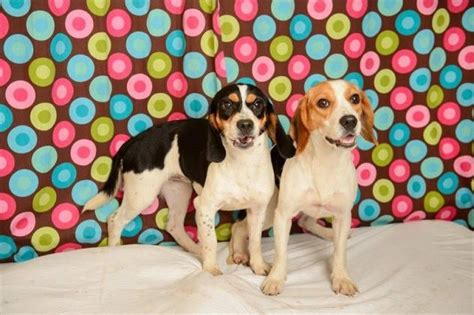 in the dog house baton rouge 15 yelp baton rouge dogs in need of adoptions or fosters