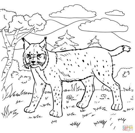 coloring pages of bobcats bobcat in the forest coloring page free printable