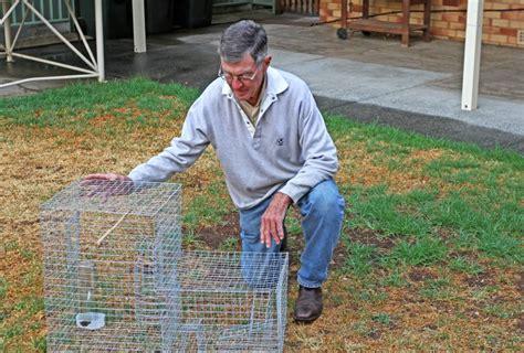 tamworth workshop targets feral birds  northern daily