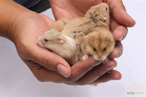 7 Tips On Taking Care Of Hamsters by Pin Hamster Care On