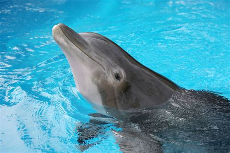 Secret Garden And Dolphin Habitat by Secret Garden Attraction At The Mirage Earns Animal