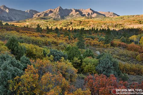 colorado fall colors colorado fall colors photos pictures of the rocky
