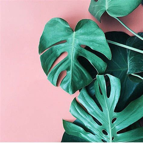 green wallpaper pinterest photo by apartmentf15 photography pinterest plants