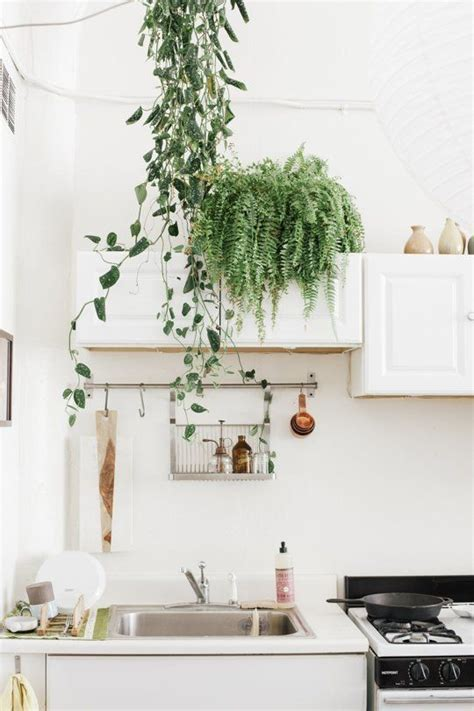 plants in the kitchen 17 best ideas about green kitchen cabinets on pinterest