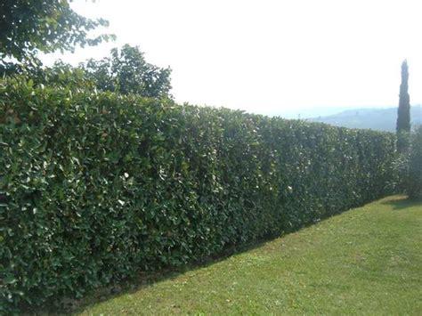 lade per gazebo lade da giardino prezzi lauroceraso prezzi piante da