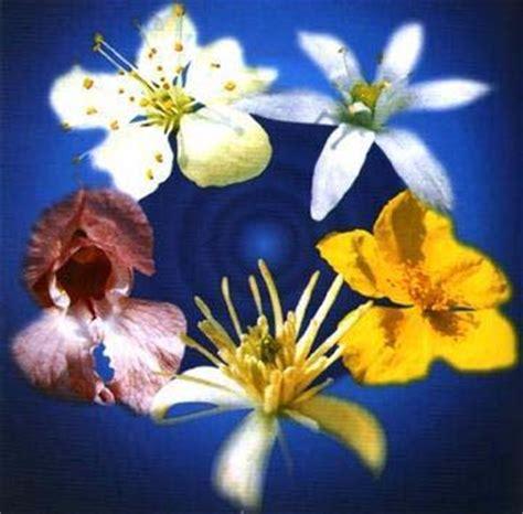 terapia con i fiori di bach fiori di bach terapia dell anima living on air magazine