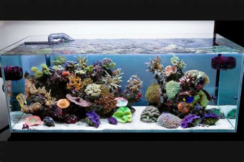 aquarium for home 29 amazing aquariums for impressive decoration of your home