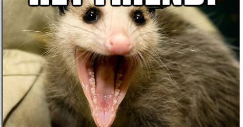 Possum Memes - awesome possum memes quickmeme lol pinterest memes
