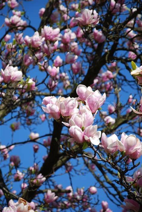 Blumen Im April by Fr 252 Hjahr April Prime Blumen Baum Stockfoto Colourbox