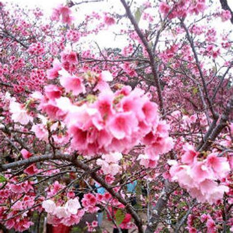 imagenes flores de invierno flores de invierno
