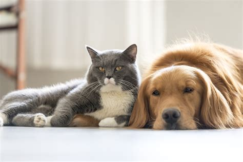 pictures of cats and dogs pictures of cats and dogs together www imgkid the image kid has it