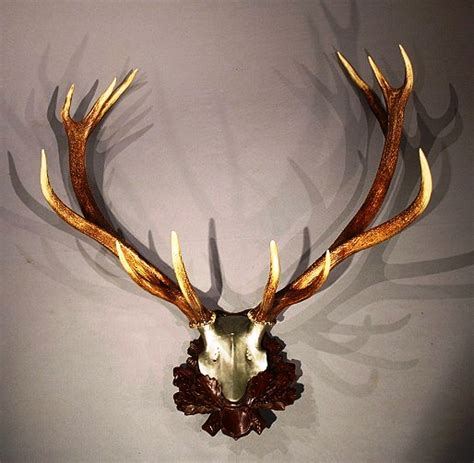 deer home decor 100 deer antler home decor whitetail deer home