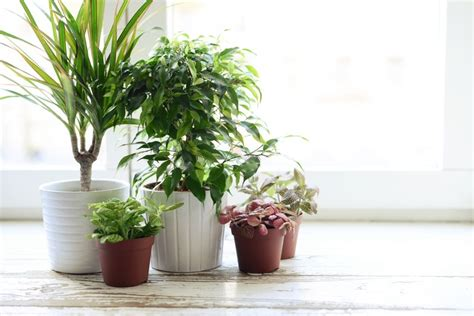 Houseplants by 9 Houseplants To Clean The Air Amp Improve Your Health
