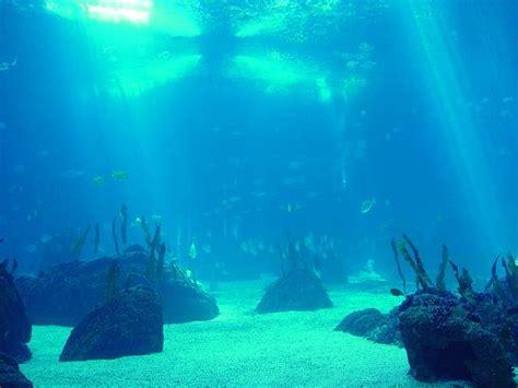 imagenes sorprendentes del oceano imagenes de los oceanos taringa