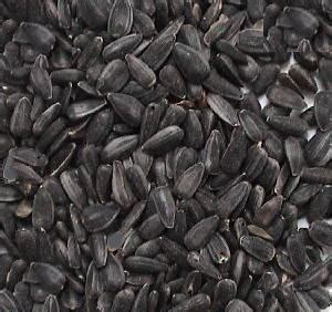 black sunflower seeds for horses weight gain sunflower seeds for horses flowers ideas