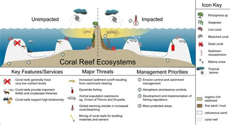 coral bleaching diagram coral reef structure szukaj w education