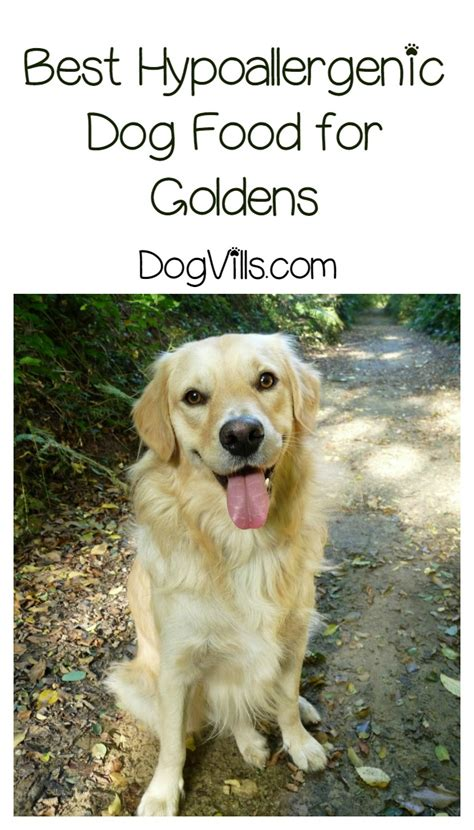 golden retriever best food best hypoallergenic food for goldens dogvills