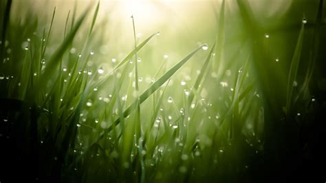 wallpaper grass  hd wallpaper green drops dew sun