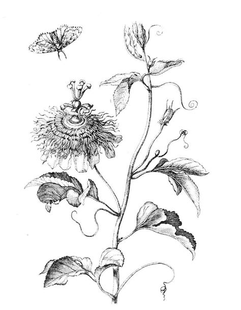 ginkgo leaf coloring page ginkgo tree coloring pages