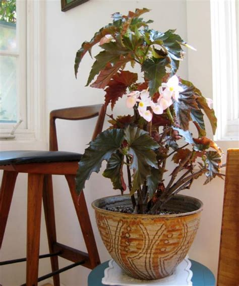 17 Best Flowering Houseplants   Balcony Garden Web