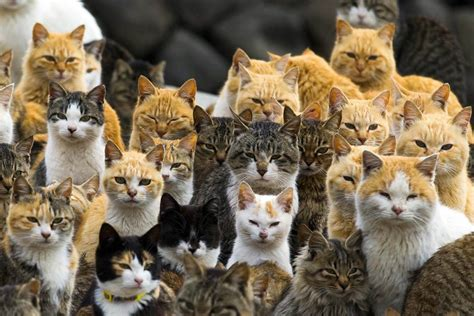 cat island cat island felines outnumber humans on japan s aoshima