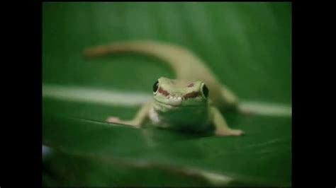 7 Geico Commercials by Geico Tv Commercial Natgeo Ispot Tv