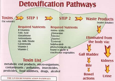 Correct Detox Procedures how to heal and detoxify your liver