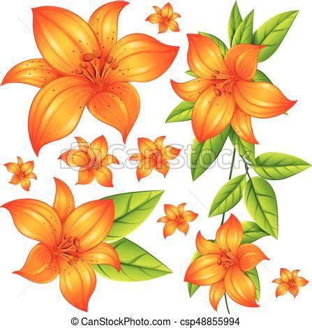 imagenes de rosas anaranjadas wild flower in orange color illustration eps vectors