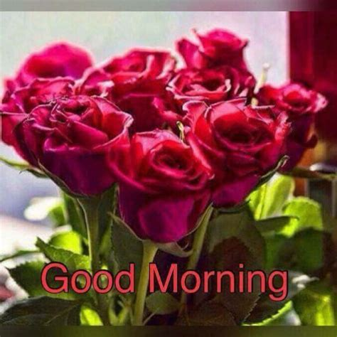 morning image flower morning whatsapp images 2017 truemsg image box