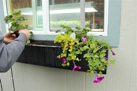 diy window box step by step guide to planting a window box