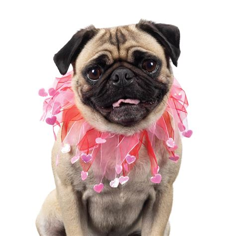 pug photos pictures puppies dogs pug photo and wallpaper beautiful pug pictures