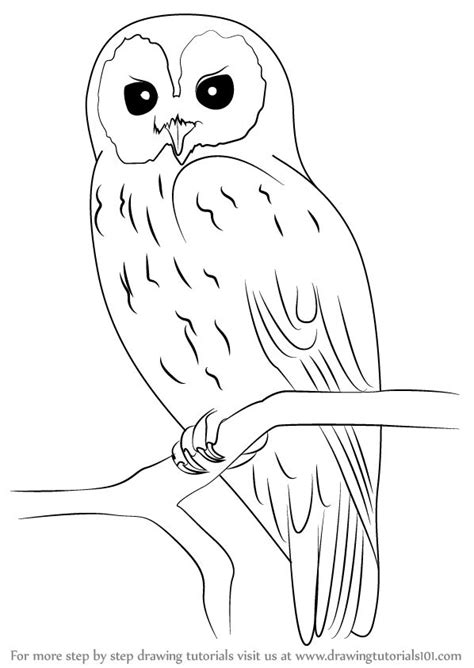 tawny owl coloring page learn how to draw a tawny owl owls step by step