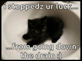Good Luck Cat Meme - funny cats archives the casino images netthe casino