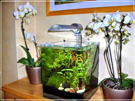 tout pour r 233 ussir votre nano aquarium d eau douce