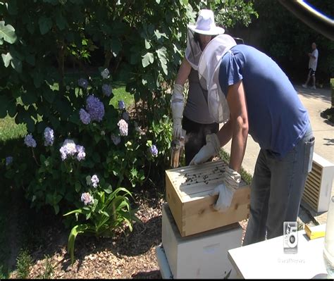 A Beehive In Your Backyard by How To A Beehive In Your Backyard Bed And Breakfasts