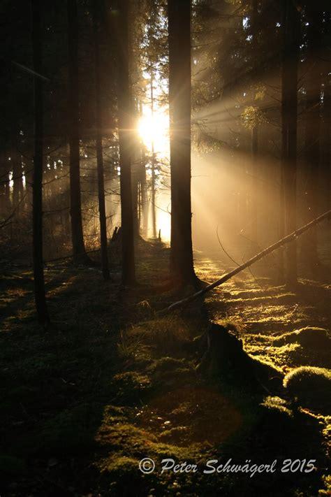 schulerloch 187 geheimnissvoller wald geheimnis - L Und Licht