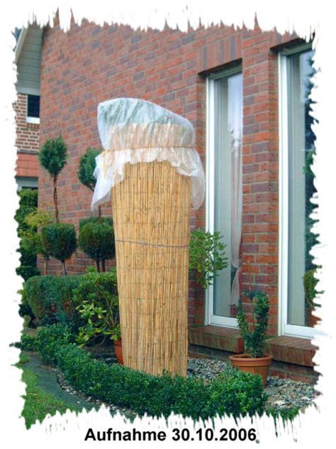 winterschutz palmen winterschutz www puppen und palmen de