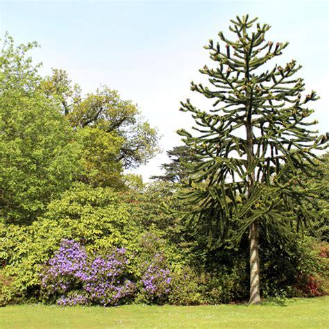 arbre 224 feuillage persistant liste ooreka