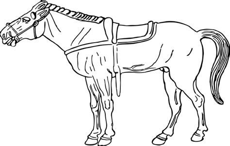 imagenes para colorear un caballo dibujos de caballos 187 caballopedia