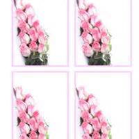 Pink Gift Card Balance - pink roses gift cards