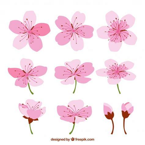 fiore di ciliegio i fiori di ciliegio con disegni diversi scaricare