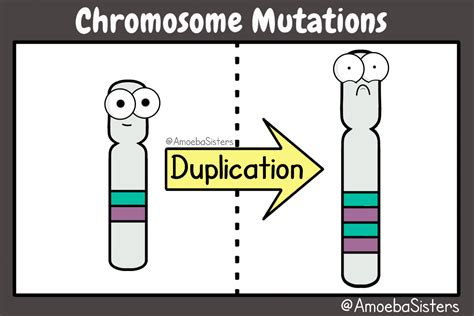 carbohydrates kahoot chromosome mutations in a gif check out all our science